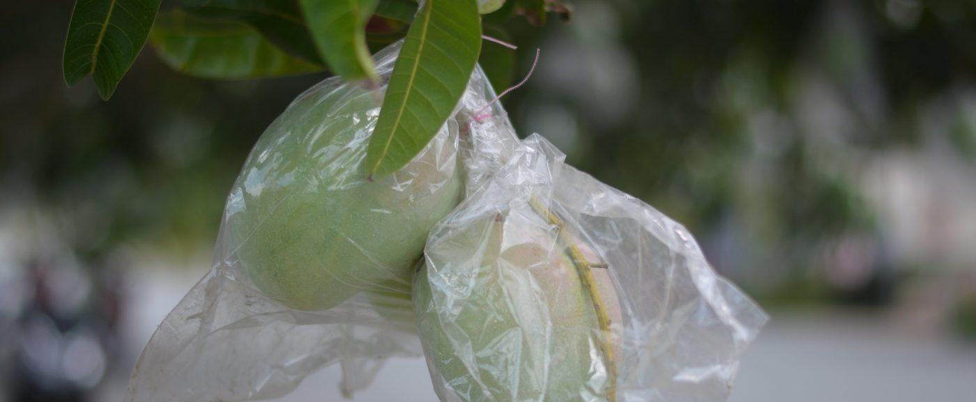 Túi bao bảo vệ trái cây BIKOO